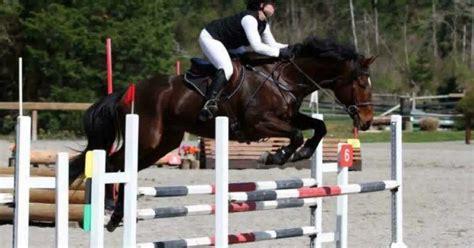 Rescue Recognition Program Rewards Rescue Horses