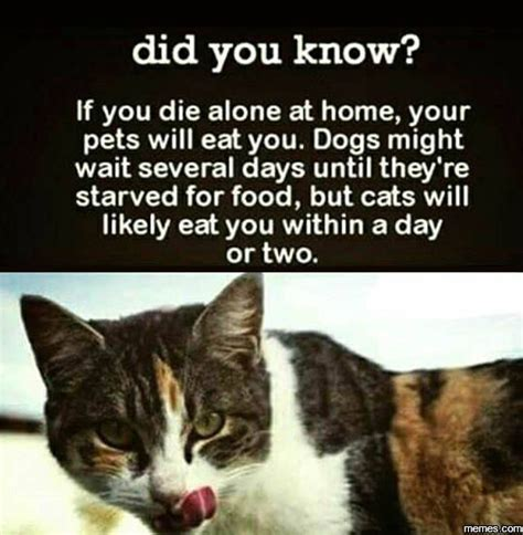 Did You Know Meme - did you know