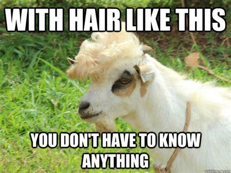 Billy Goat Meme - billy goat meme 100 images billy goat meme 1 blank template imgflip bitch nobody tryna