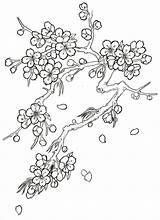 Blossom Cherry Drawing Tree Coloring Flower Tattoo Japanese Drawings Blossoms Step Flowers Trees Sketch Pages Pencil Outline Draw Line Printable sketch template