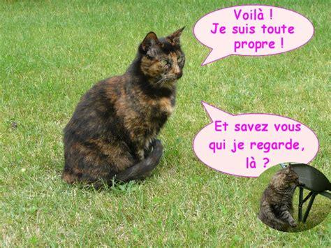 mon chat va souvent au toilette toilette de chat le de colibri et d eowin