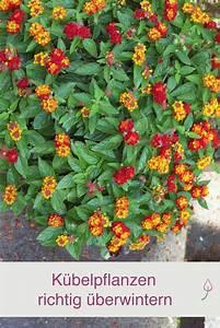 Pflanzen Schattig Winterhart : k belpflanzen richtig berwintern k belpflanzen ~ A.2002-acura-tl-radio.info Haus und Dekorationen