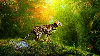 Animated Wallpapers Animals