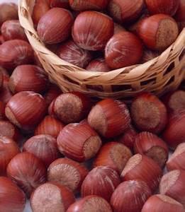 Rote Haselnuss Kaufen : haselnuss rote zellernuss von gartenxxl auf kaufen ~ Michelbontemps.com Haus und Dekorationen