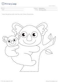 trace  colour mother koala bear  joey