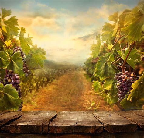 vineyard design stock photo image
