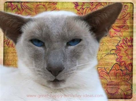 funny cat birthday wishes  birthday wishes ecards