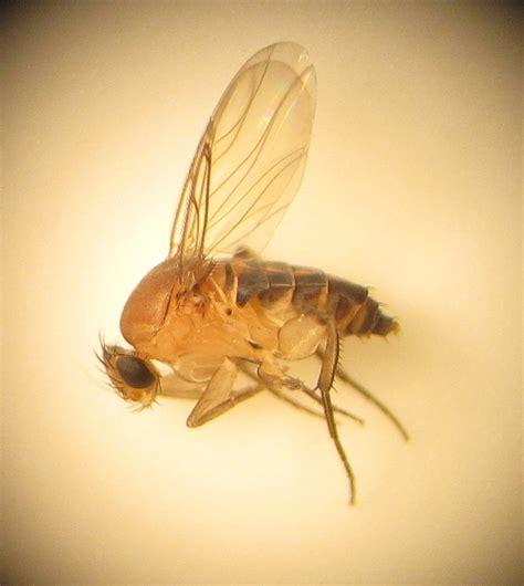 flies in my house bug eric scuttle flies