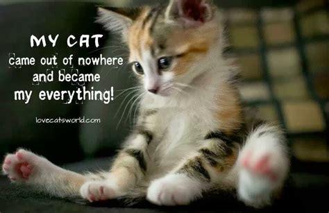 Cute Cat And Dog Quotes Quotesgram