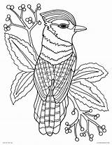 Coloring Pages Bird Realistic Adults Animal Printable Jay Drawing Nature Paradise Bluejay Detailed Animals Adult Amazing Printables Palette Paint Fun sketch template