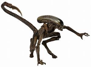 "Aliens 7"" Scale Action Figures Series 8 NECAOnline com"