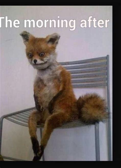 Morning After Meme - the morning after meme memes jokes memes pictures me waking up sunday morning after a of by