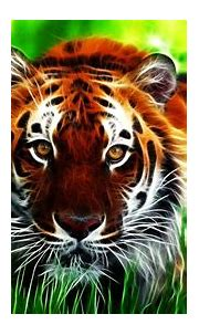 Tiger background ·① Download free beautiful full HD ...