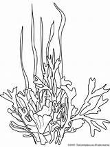Seaweed Coloring Pages Drawing Ocean Plants Printable Drawings Coral Sea Underwater Plant Google Line Colouring Cartoon Template Mycoloring Colors Printables sketch template