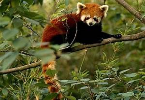 What is Master Shifu? Chinchila? - Kung Fu Panda Answers ...