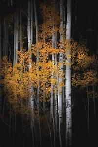New, Fall, Colorado, Aspen, Trees, Fall, Aspens, Fall, Tree, Decor, Colorado, Art, Asp, U2026, U2013, Fall, Decor