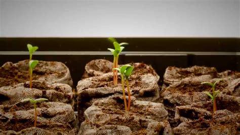 best grow lights for seedlings best grow lights for starting seeds mother earth news