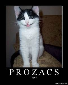 Very funny cat pictures with captions funny cat photos ...