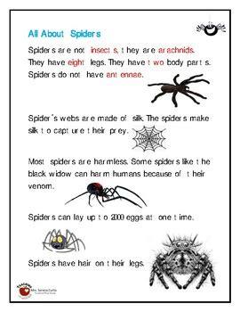 spiders worksheet  serena curtis teachers pay teachers