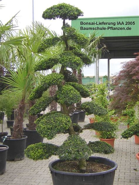 Asia Garten Pflanzen by Pflanzengestaltung Auf Der Iaa 2005 Baumschule Pflanzen
