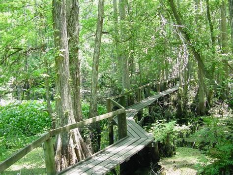 hammocks state park look up its beautiful picture of highlands hammock