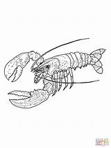 Lobster Coloring Pages Maine Spiny Outline Drawing Colouring Printable Line Clip Lobsters Flower Supercoloring Dot Template Print Draw Main Drawings sketch template