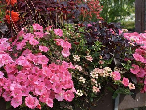 blumen für den balkon romantischer blumenschmuck am balkon balkonk 228 sten f 252 r den sommer blumen pflanzen balkon