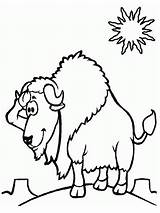 Pages Bison Coloring Desert Printable Realistic Sheet Colouring Activity Coloringcrew Today sketch template