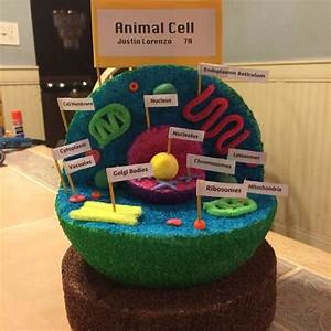 10 Unique 3d Animal Cell Project Ideas 2020