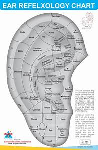 Acupressure Ear Chart