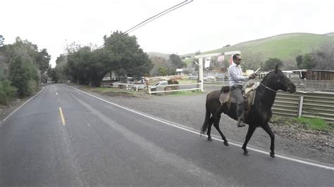 horse riding texting road while