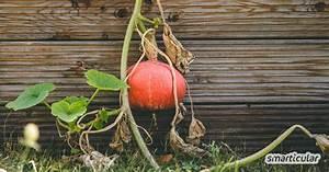 Permakultur Garten Anlegen : permakultur im eigenen biogarten anwenden 19 einfache schritte ~ Markanthonyermac.com Haus und Dekorationen