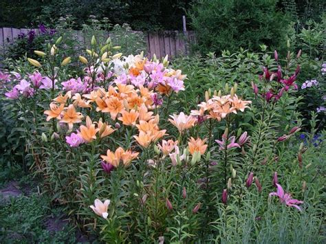 garden plants flowering places of original cultivation