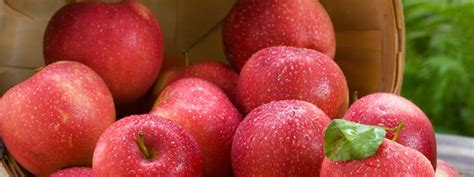 show me a picture of an apple apples minnesota hardy