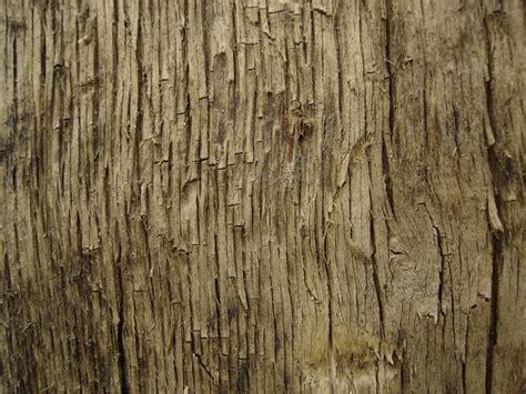 trees texture tree texture 11 by lunanyxstock on deviantart
