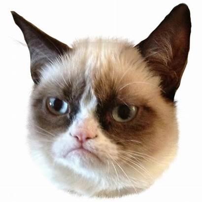 Cat Grumpy Transparent Background Face Memes Team