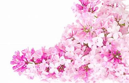 Pink Flower Need