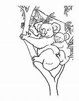 Koala Coloring Printable Animal sketch template