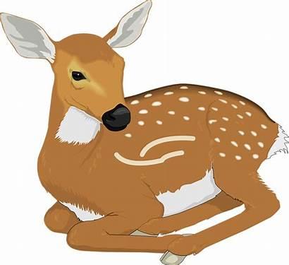 Deer Clipart Vector Animals Clip Resting Animal