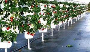 Potager Hors Sol : le jardin potager vertical hydroponique balcon jardin ~ Premium-room.com Idées de Décoration