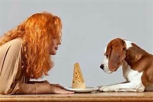 Can dogs eat cheese for Akc dog food