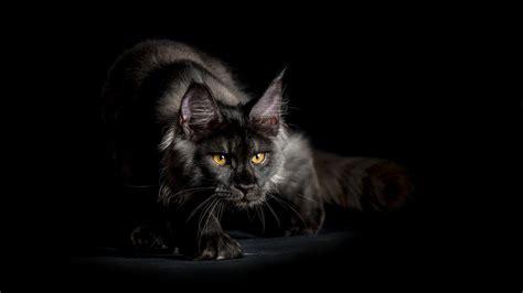Black Cat Hd Wallpaper  Wallpaper Studio 10  Tens Of