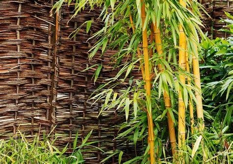 Comment Se Débarrasser Du Bambou Dans Votre Jardin