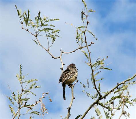 Sonoran Birds at the Desert Museum, Tucson, Arizona ...