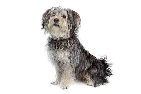 popular dog breeds  ireland small dogs large dogs petmania