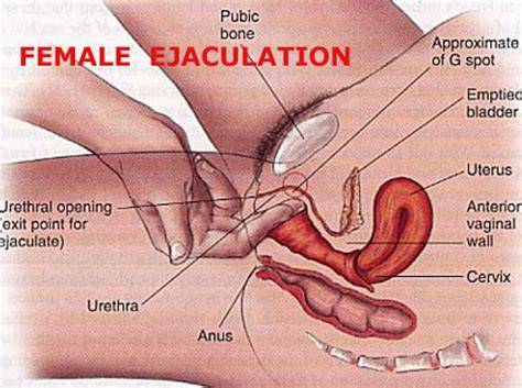 How To Female Ejaculate The Arousal Project