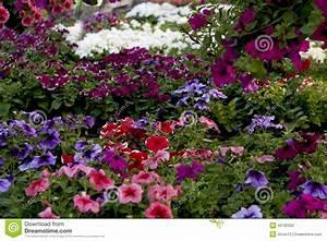 Blumen Für Schatten : blumen f r den balkon stockfoto bild 40782050 ~ Lizthompson.info Haus und Dekorationen