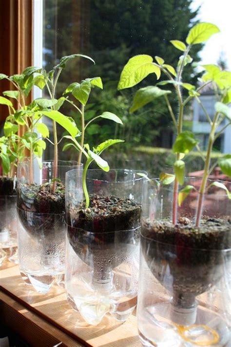 diy  watering seed starter pots  owner builder