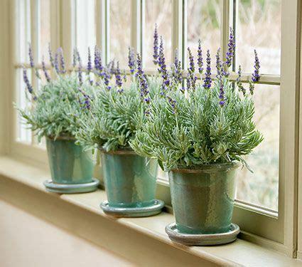 fragrant houseplants fragrant houseplants white flower farm