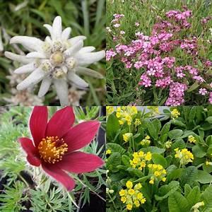 Stauden Für Steingarten : 28 stk pflanzen bodendecker steingarten mix 1 frostfeste stauden ebay ~ Yasmunasinghe.com Haus und Dekorationen